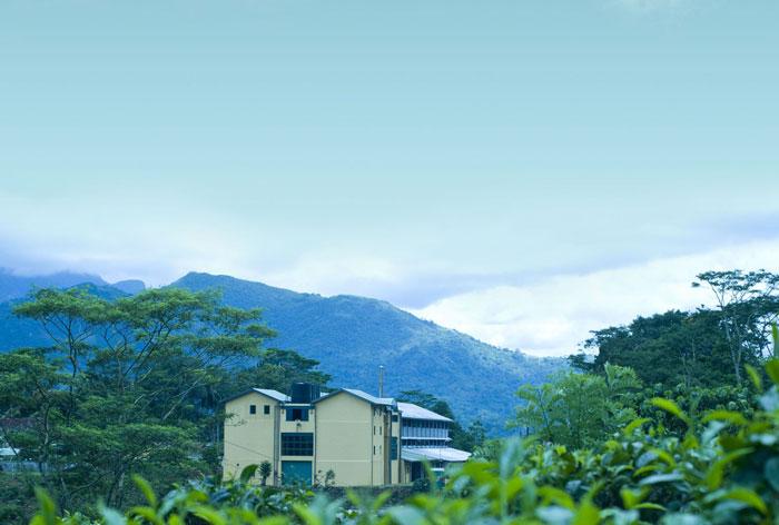 Real Tea - Rilhena Estate